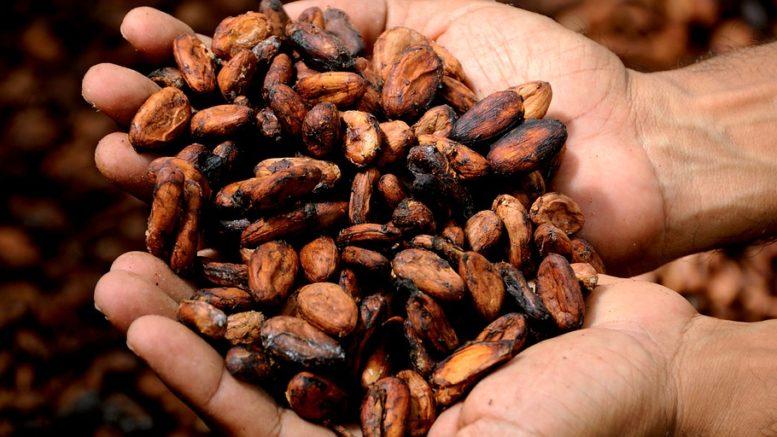 Trading sul Cacao, Perché Conviene Investire nel 2019