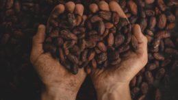 Previsioni Cacao 2019 2024: rapporto Marketresearchnest