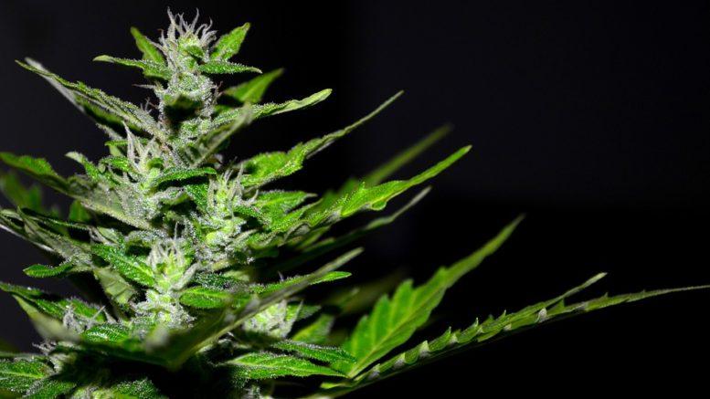 Robinhood conferma che oltre 420.000 utenti posseggono azioni Aurora Cannabis (ACB)